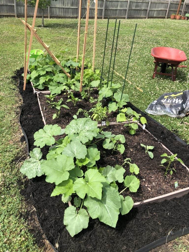 early vegetable garden