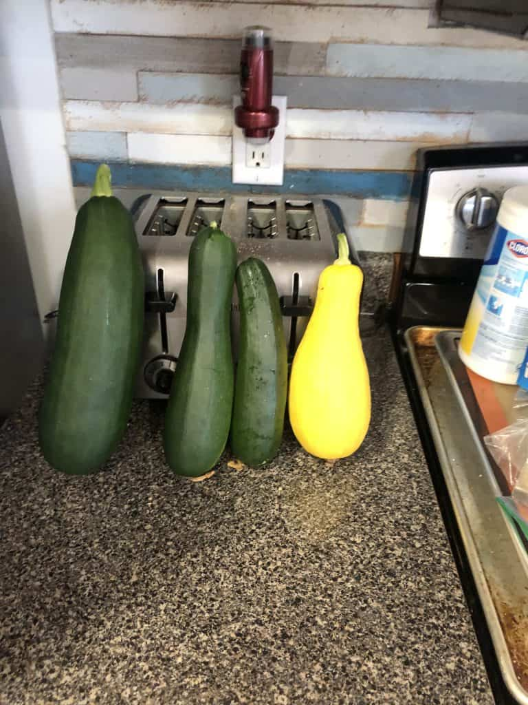 zuchinni and squash fresh from the garden