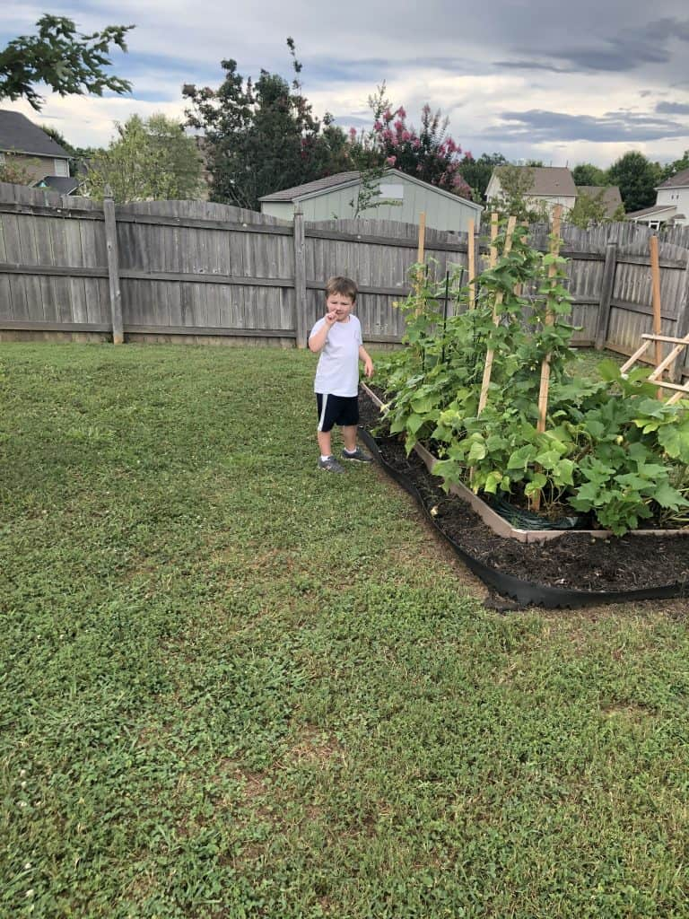 little boy in front of garden
