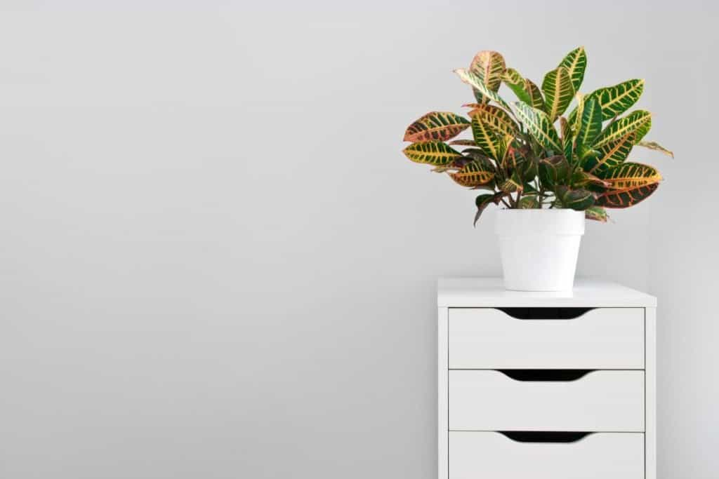 White chest of drawers with green plant on top in white pot