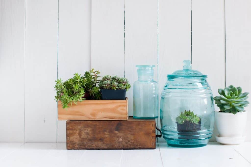 tidy set of planters with succulents in them